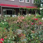 秋のばら園オープン|姫路ばら園