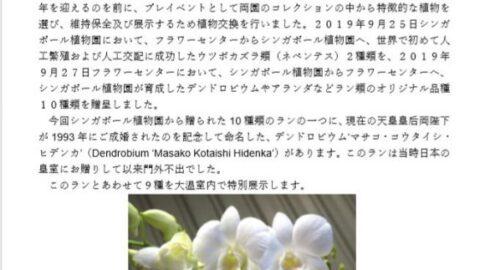 国内初公開。デンドロビウム マサコ・コウタイシ・ヒデンカ