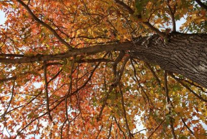 飯森山もだんだん紅葉してきました。|兵庫県立フラワーセンター