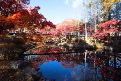 紅葉期間中はライトアップ|多可町余暇村公園