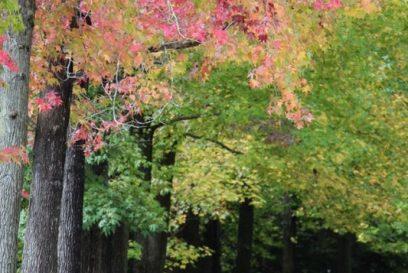 園内の木々や飯森山も少しずつ紅葉|兵庫県立フラワーセンター