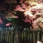 五百羅漢紅葉ライトアップ|羅漢寺|加西市