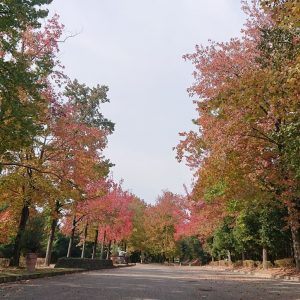 市内も紅葉が始まってます|加西市観光まちづくり協会