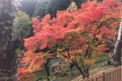 紅葉真っ盛り!今が見どころ。スピードくじを実施中