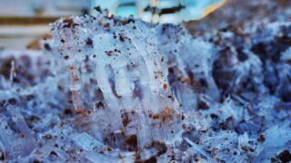 山頂では霜の結晶が出来ていました 峰山高原リゾートホワイトピーク
