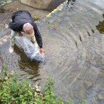 豊かな岡部川を目指して。ニジマスの稚魚約1000匹を放流|市川町