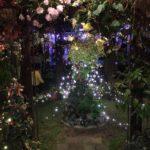 花と光のクリスマス 2019|兵庫県立フラワーセンター 冬のイルミネーション