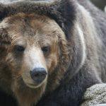 クマに注意|ツキノワグマ4頭|市川町