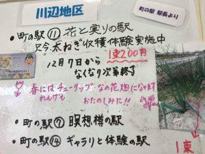 市川町町の駅 花と実りの駅で九条ねぎの収穫体験開始