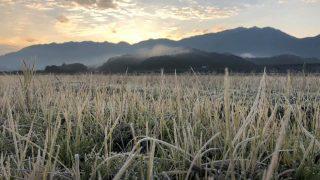 霜が降りて岩津ねぎも甘味が増します|朝来市