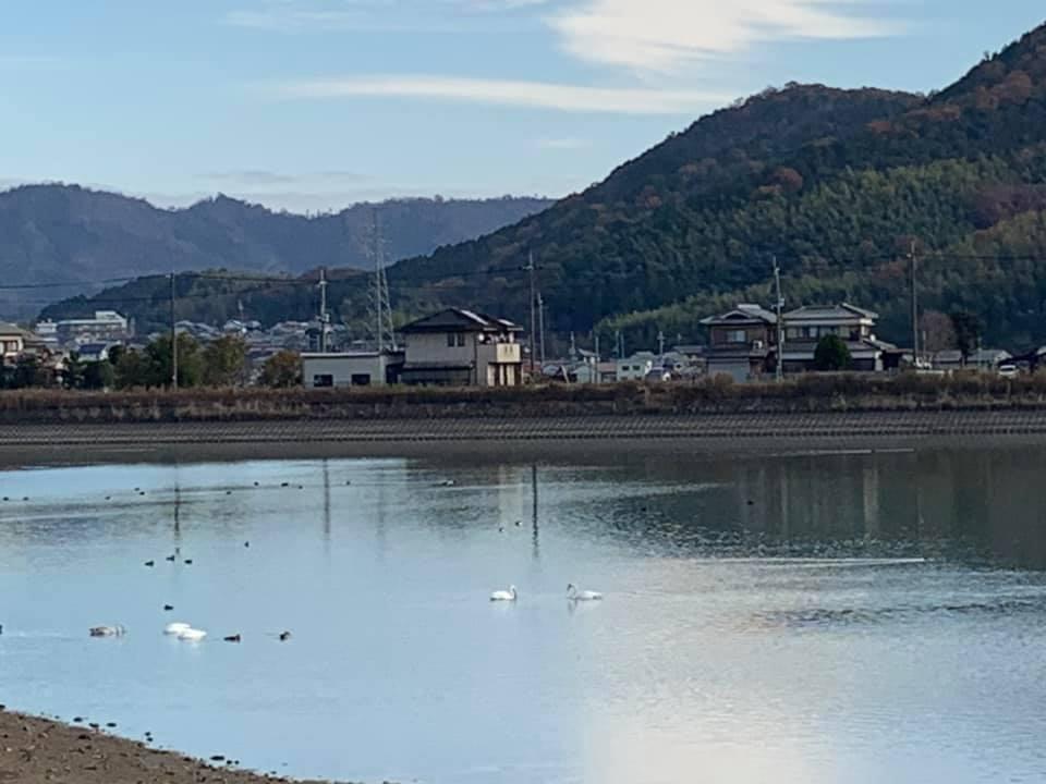 神崎郡福崎町|今年も長池に白鳥