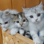 9月30日に生まれたばかりの仔猫たち 左からレモン(♀)プラム(♂)アケビ(♀)2020年1月7日頃からふれあいデビューをする予定。 ※但し仔猫の体調などを考慮し、時間短縮やふれあいを延期する場合があります。 (画像・情報:神崎農村公園ヨーデルの森さんより) 年末年始の予定 元日を除き5日まで営業 以降2月末までは土日祝のみの営業