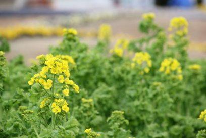 日に日に春へ|兵庫県立フラワーセンター