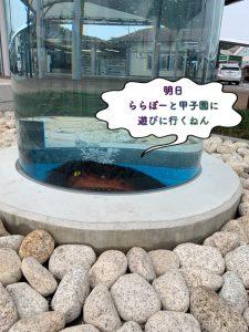 ガジロウがららぽーと甲子園に行くみたい