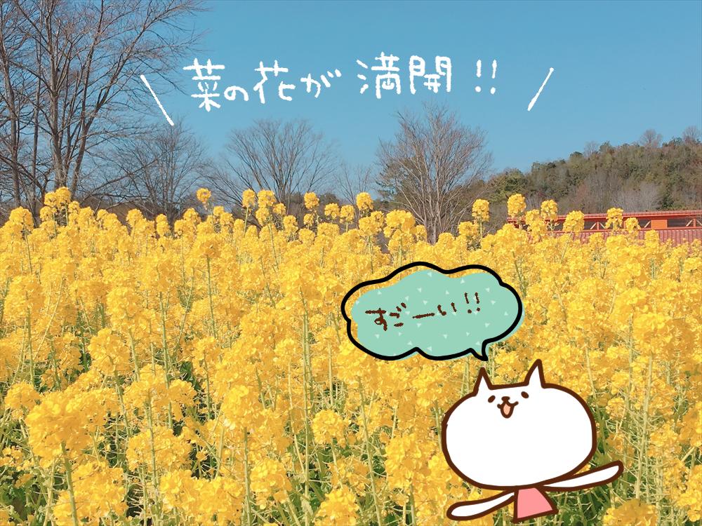 【加西市】ひなまつりフェア開催。菜の花も満開|フラワーセンター