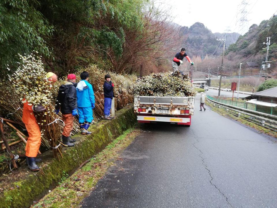 【神河町】2000キロほどの三椏(ミツマタ)を伐採、搬出