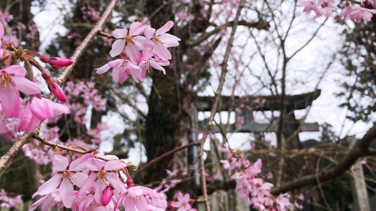 福本藩陣屋跡と大歳神社