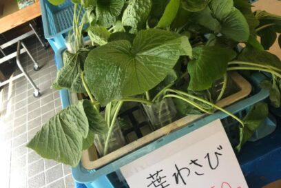 【宍粟市】葉わさび山菜祭り|道の駅みなみ波賀