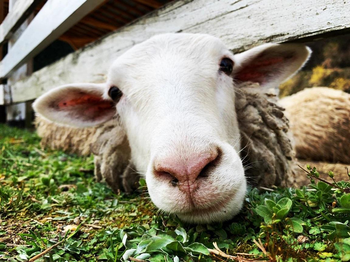 【神河町】4月19日は「飼育の日」。園内の動物への質問募集 神崎農村公園ヨーデルの森