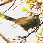 市川町文化センター周辺の野鳥たち|市川町観光協会