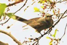 【市川町】文化センター周辺の野鳥たち 市川町観光協会