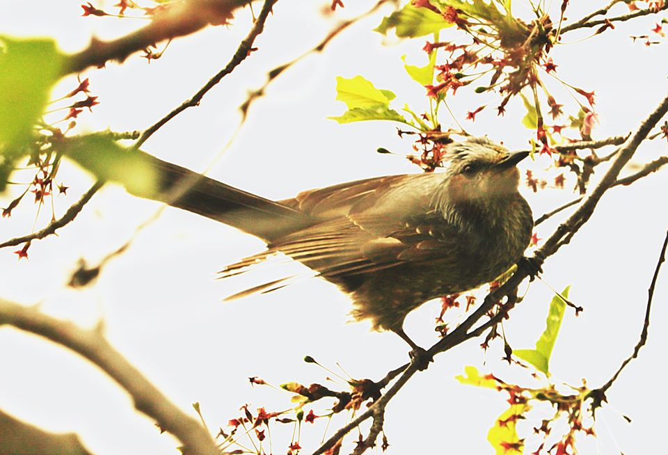 【市川町】文化センター周辺の野鳥たち|市川町観光協会