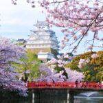 【姫路城の桜】オンライン飲み会サービス『たくのむ』|全国の自治体や花見実行委員会と連携