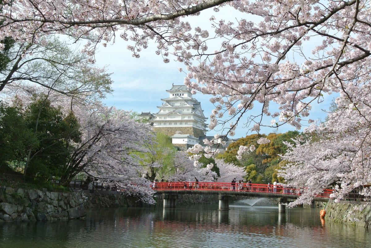 【姫路城の桜】オンライン飲み会サービス『たくのむ』 全国の自治体や花見実行委員会と連携