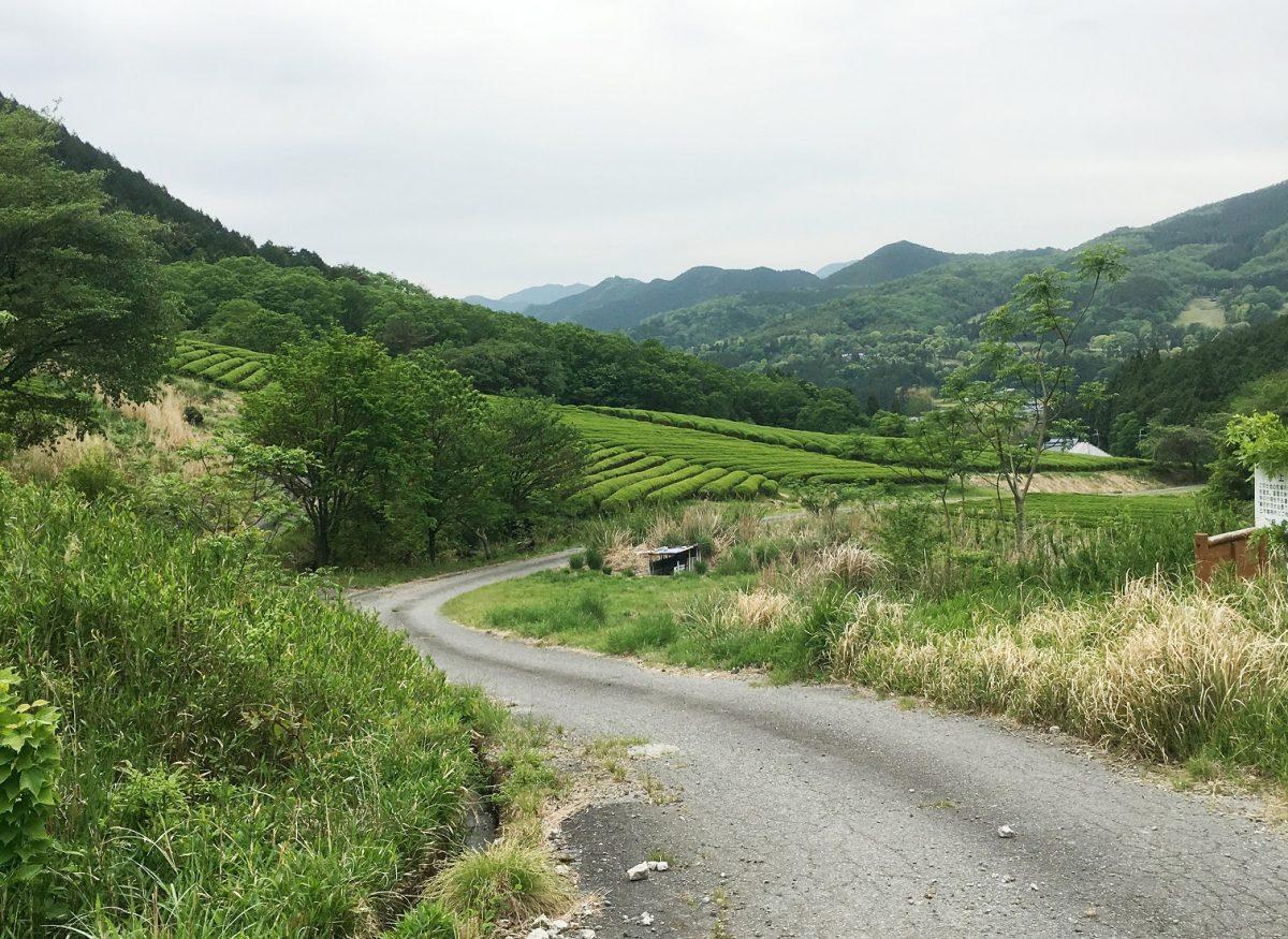 【神河町】仙霊茶の茶畑と吉冨製茶工場 アポ無しいきなり凸シリーズ