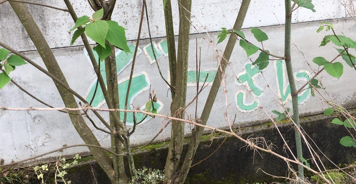 【神河町】山中に突如現れる楽園? 象に熱帯魚にミッ○ー 地域の謎スポット