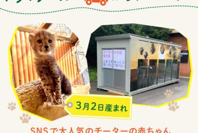 【姫路市】チーターの赤ちゃん「しばふちゃん」に逢える!|姫路セントラルパーク