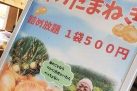 【神河町】園内で採れた玉ねぎ(たまねぎ)が詰め放題|神崎農村公園ヨーデルの森