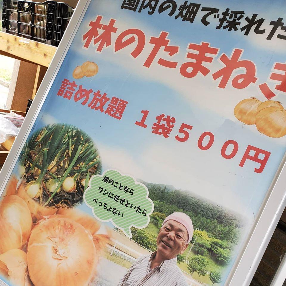 【神河町】園内で採れた玉ねぎ(たまねぎ)が詰め放題 神崎農村公園ヨーデルの森