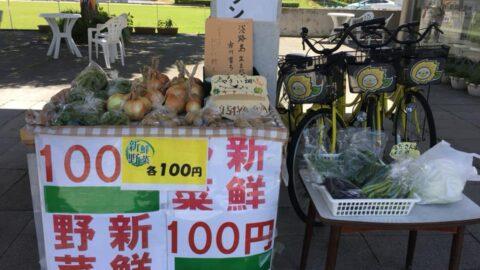 【市川町】野菜直売コーナーにたくさんの野菜が並びました ひまりん観光案内所