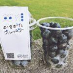 【市川町】笠形オーガニックファーマーズのブルーベリーが登場|かさがたブルーベリー