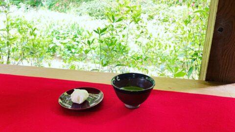 【福崎町】應聖寺(おうしょうじ)沙羅の花 お抹茶と和菓子「沙羅」