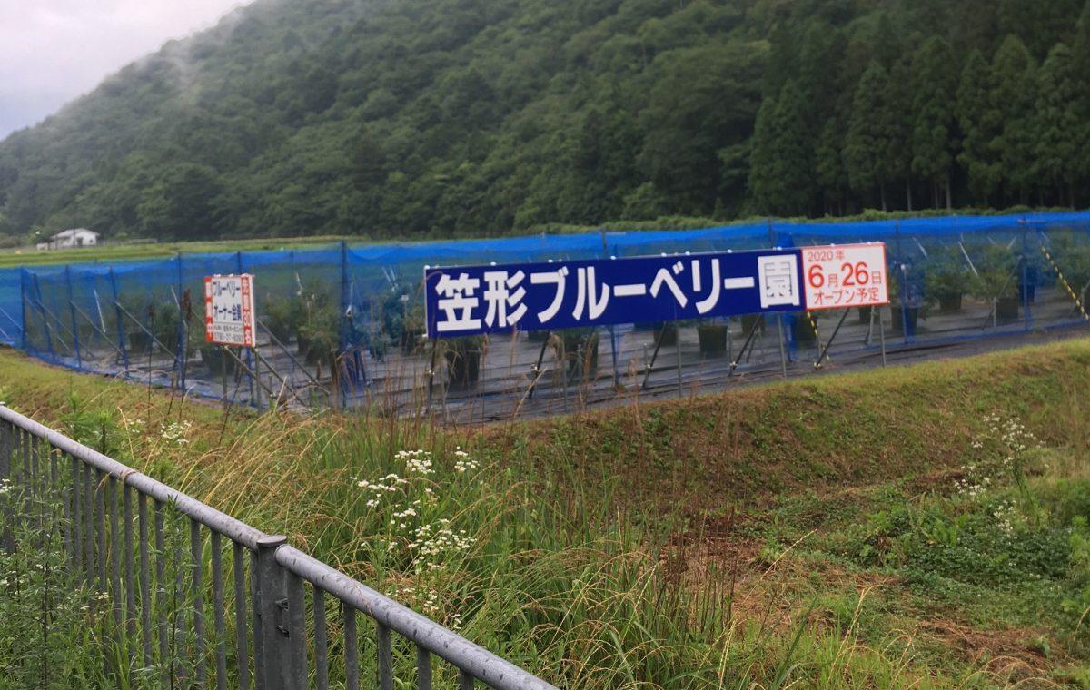 【市川町】笠形ブルーベリー園で摘み取り体験が開催