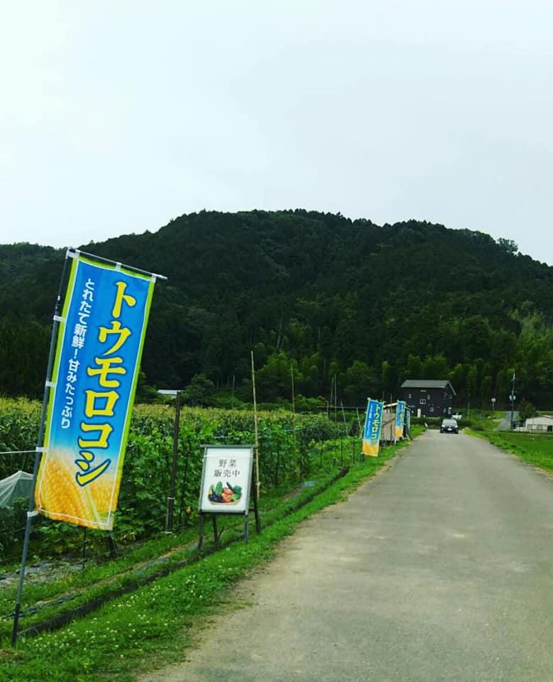 【市川町】トウモロコシの直売は7月10日から|かまださん家のぶどう園