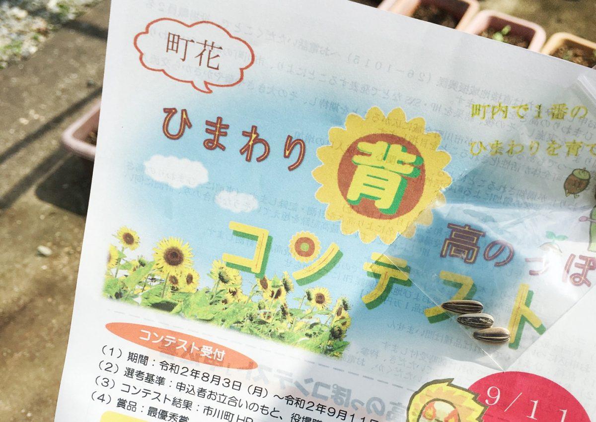 【市川町】でっかく咲け。「ひまわりスマイルプロジェクト」 町花ひまわりを普及させよう