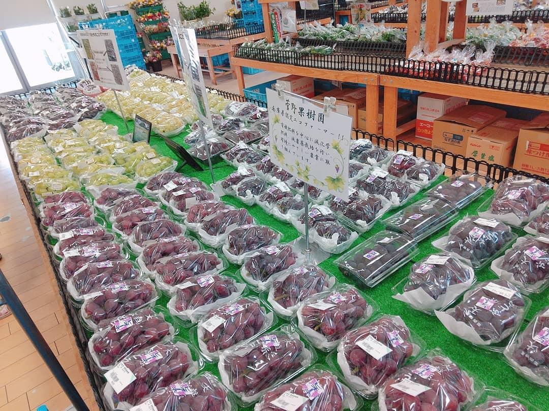 【かさい愛菜館】加西のぶどうがシーズン|ゴールデンベリーAや藤稔