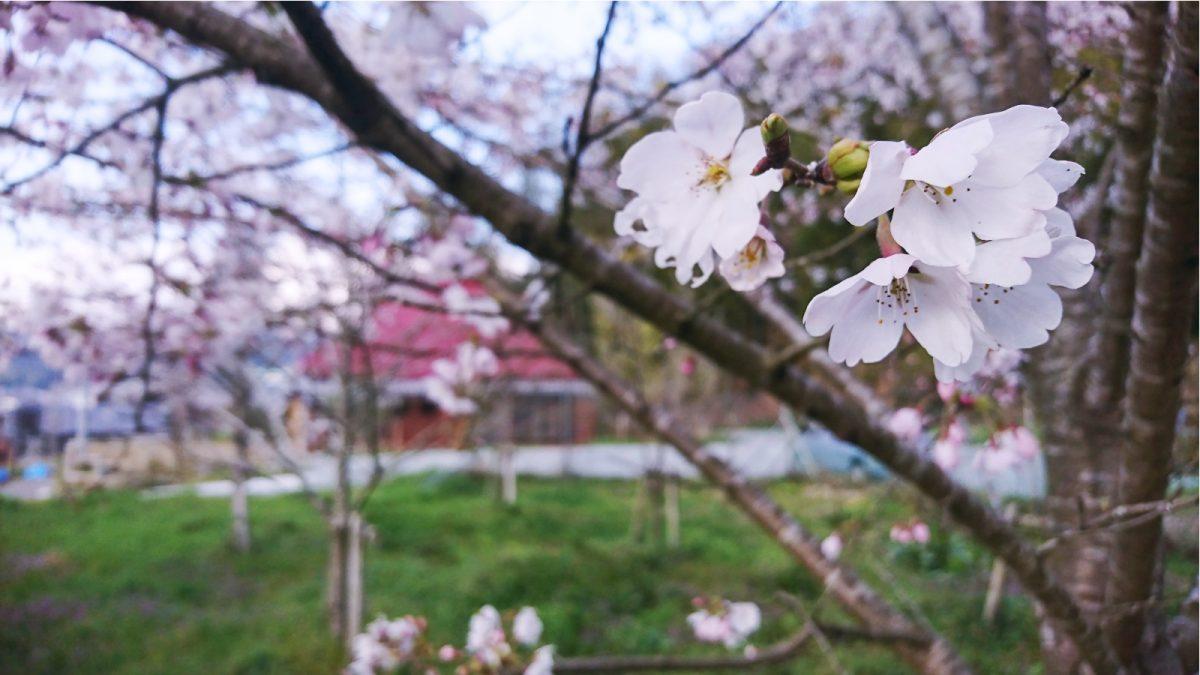 古民家カフェ「ゆう庵」 四季の庭(オープンガーデ)