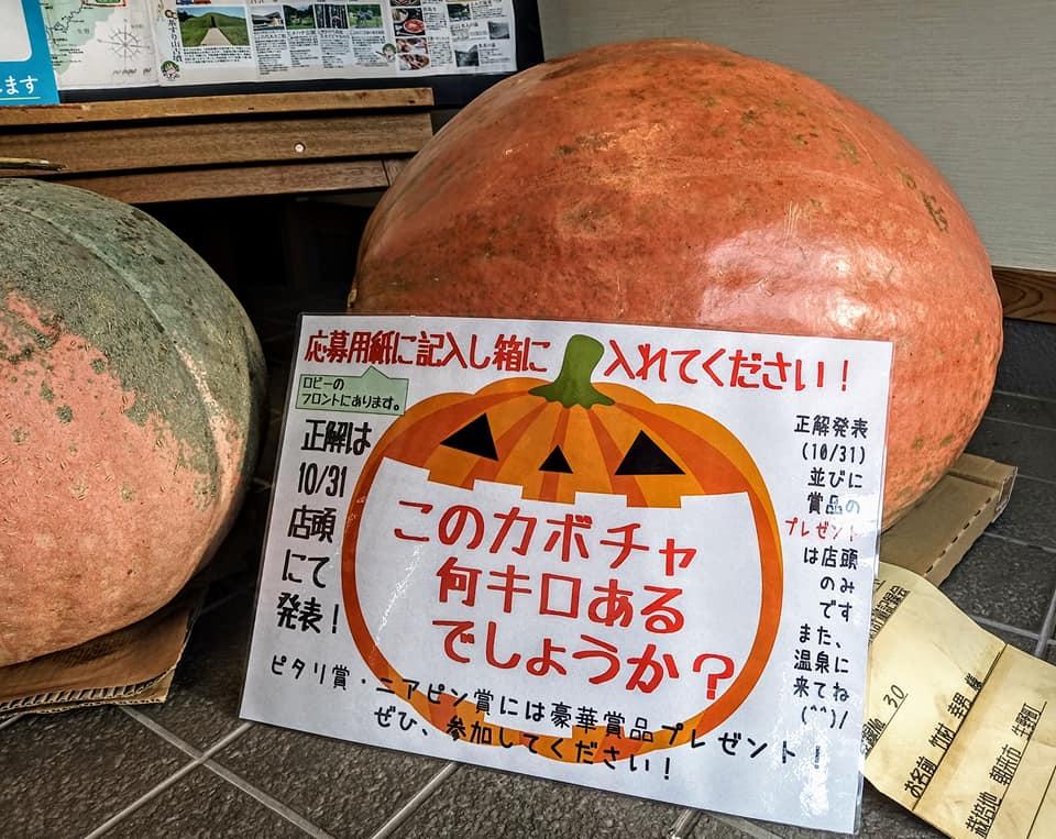 【朝来市】カボチャ何キロ?|黒川温泉