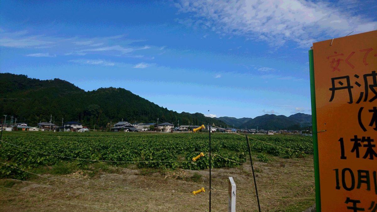 【市川町】丹波の黒豆を株単位で直売|東川辺営農