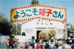 アジアゾウ「姫子」死亡 姫路市立動物園