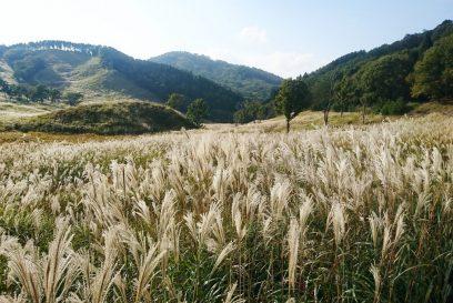 【神河町】砥峰高原を満喫したい!四季のイベントと風景|アクセスと施設情報