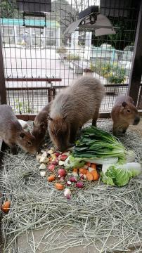 【姫路市立動物園】サポーター加入で「ウン」がついている合格お守り