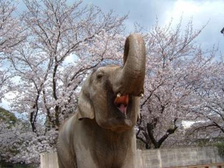 アジアゾウ「姫子」死亡|姫路市立動物園