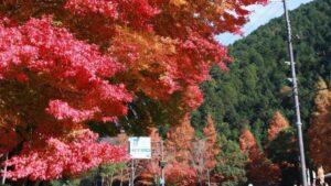 【紅葉】道の駅 杉原紙の里多可 多可町 みんなのフォト
