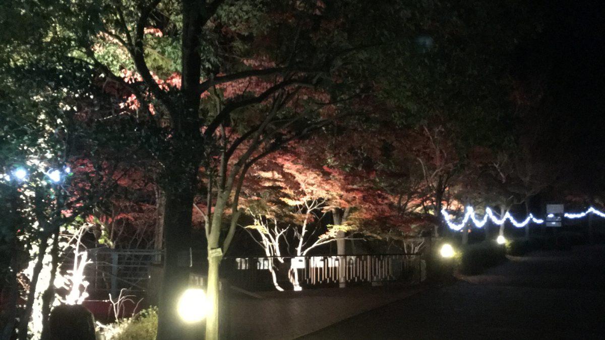 紅葉ライトアップ|多可町余暇村公園
