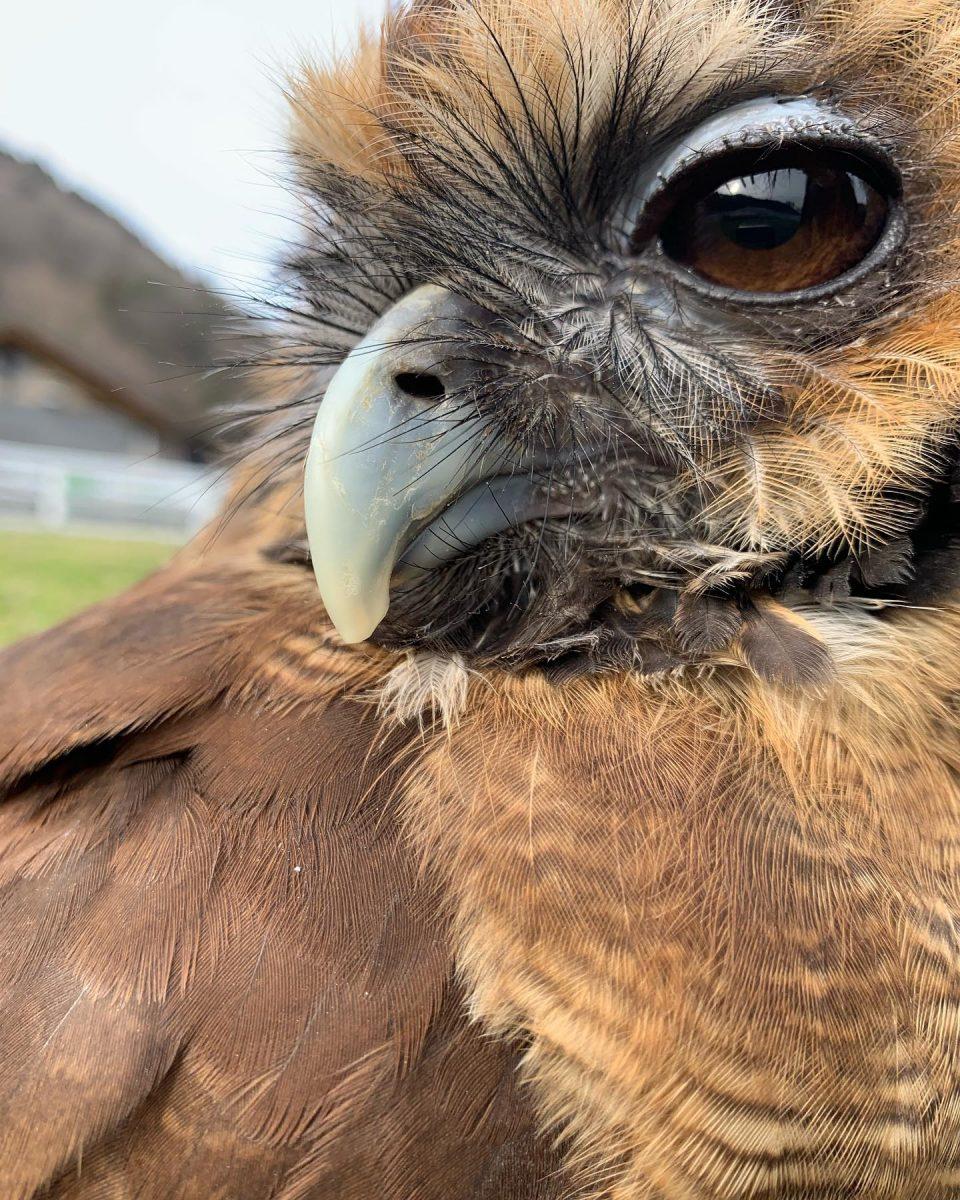 鳥インフルエンザ感染防止対策|神崎農村公園ヨーデルの森